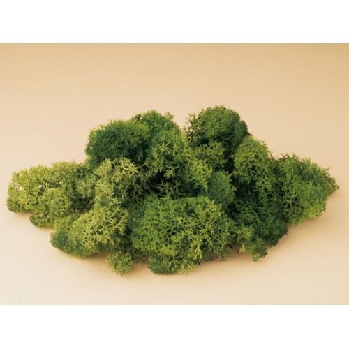 AU76651 Icelandic moss green