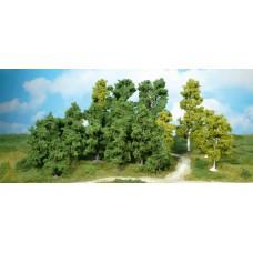 HE1950 10 Leaf trees, 8-12 cm