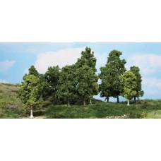 HE1991 15 leafy trees, 10-18 cm