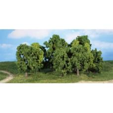 HE1993 12 leafy trees, 8-13 cm