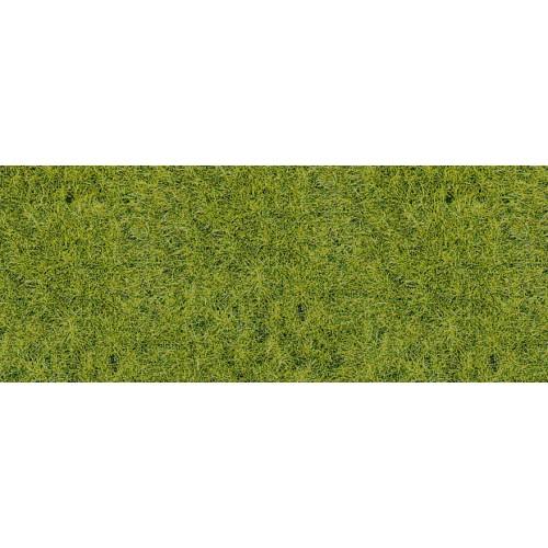HE1856 Wildgras Waldboden