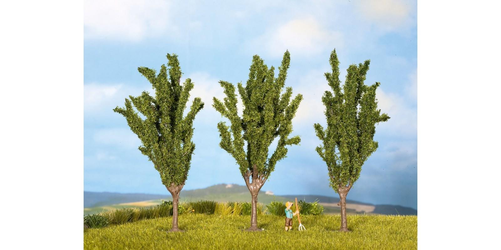 NO25140 Poplars